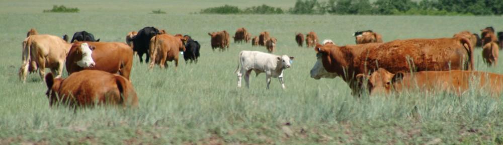 Morrow Family Ranch