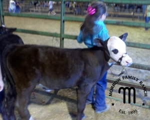 MFR sapph at fair